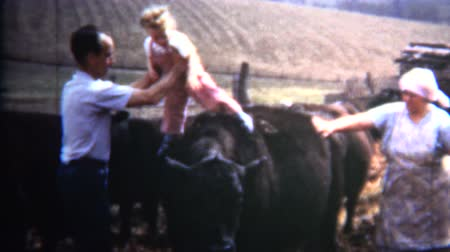 iowa : 8mm Vintage 1952 Dad Puts Baby on Iowa Cattle as Joke Stock Footage