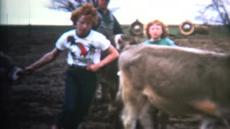 sinematografi : 8mm Vintage 1952 Napoleon Dynamite Type Owned By Cows. Iowa, USA.
