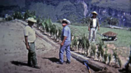 archívum : MEXICO CITY -1973: Farm hand workers tending to high elevation terraced fields. Stock mozgókép