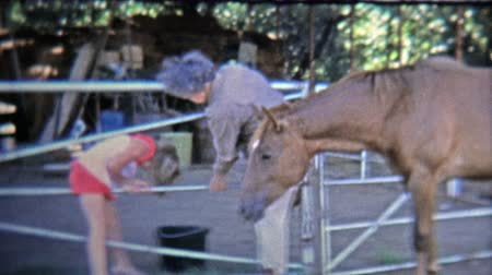 archívum : GREENSBORO, NC -1973: Girl harassed by horse, gets love from cow. Stock mozgókép