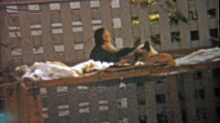 korszak : 1959: Monkey and cat play together as animal companion buddy friends.