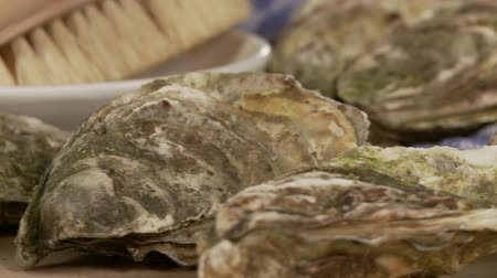 měkkýšů : Fresh oysters and a kitchen brush Dostupné videozáznamy