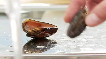 puhatestű : Open mussels being sorted out