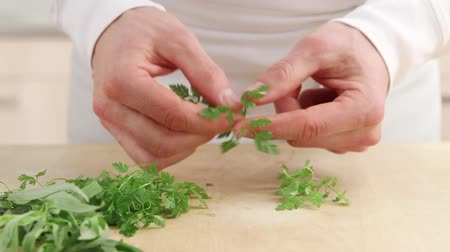 plucked : Chervil being torn Stock Footage