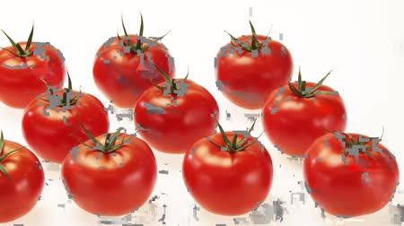 outlinable : Fresh tomatoes in rows