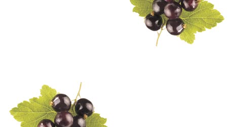 groselhas : Blackcurrants with leaf Vídeos