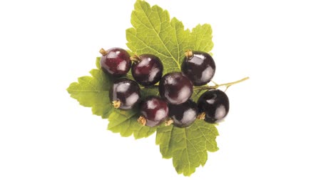 groselhas : Rotating blackcurrants with leaf