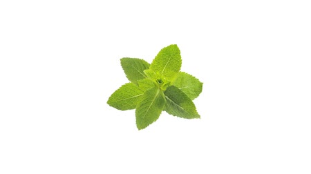 outlinable : Fresh Mint Sprig