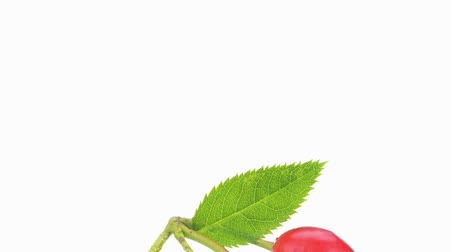 outlinable : Four rose hips