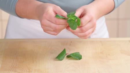 plucked : Mint leaves being removed from the stem