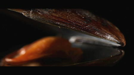 pivoting : An opened mussel (close-up) Stock Footage