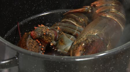 Lobster being cooked (US-English voice-over) Vídeos