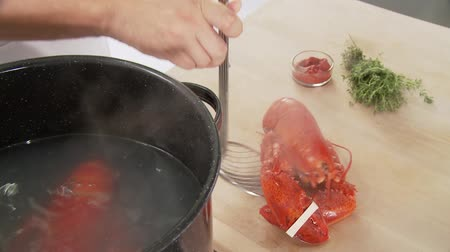 Taking cooked lobster out of water Vídeos