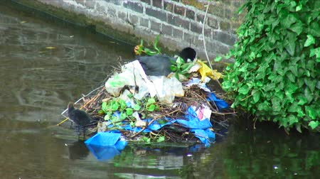 hnízdo : A bird sits on a nest it built out of leaves, twigs, and garbage on a river