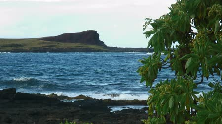 mohás : Hawaiian shoreline with volcanic rock and tropical tree in foreground with island and cliff in background.