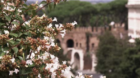 vatikan : A shot of Rome Italy with white flowers in the foreground. Stok Video