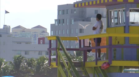 Майами : A shot of a man looking over the beach from a lifeguard tower. Seagulls fly into view during the shot.
