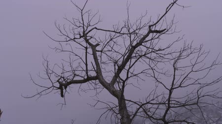 gałązki : Low-angle footage of the bare branches of a tree