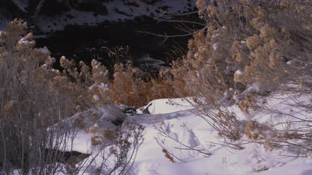 gałązki : Snow-covered bushes lead down to running creek. Filmed on the bank.
