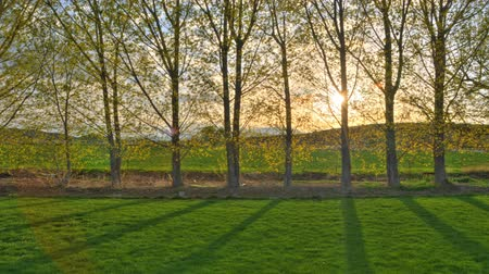 nuvem : Time-lapse shot of poplar trees with lens flare