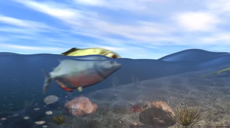 inferior : A tropical fish jumps out of tranquil rolling ocean waves as a lizard skitters underneath on the seabed.