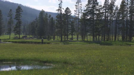 idaho : Wide shot of trees in a grassy meadow