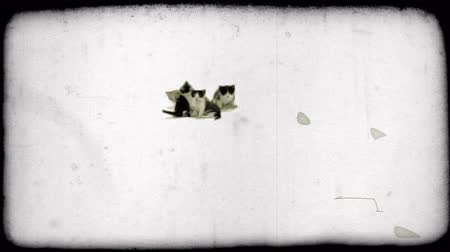 прижиматься : Wide shot of four kittens grouped together, one with orange, tan fur and the other three with white and black fur, as they sit together suspended with white studio space around them. Vintage stylized video clip. Стоковые видеозаписи