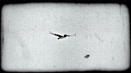 gracioso : Dark pelican with long wings and beak flys gracefully across blue sky. Vintage stylized video clip. Vídeos