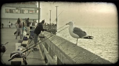 чайка : Seagull sits on post of busy California fishing pier next to abandoned fishing poles with many people in background fishing and enjoying the dusk colors in the sky. Vintage stylized video clip.