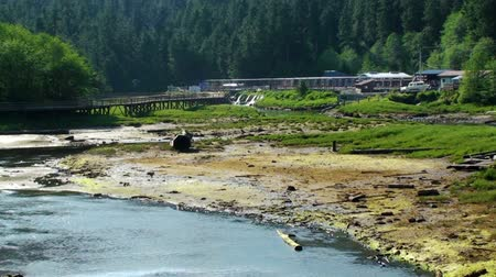 patak : Shot of a river bend in Ketchikan, Alaska with boardwalks and buildings in the background. Stock mozgókép