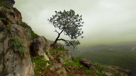 rochoso : Dolly right to left up a mountain slope with a lone tree clinging to the shallow soil of the rocky terrain. Hazy forest valley floor in the far background. Near the Adamit Park region of Israel.