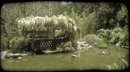 klidný : Murkey brown pond with orange fish next to a veranda with hanging plants and purple flowers and bird house on left, in Asian garden filled with traditional green trees and plants. Vintage stylized video clip.