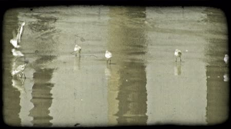 que apoia : Small birds move quickly looking for food on a beach, as mossy pier supporting stands are reflected on the wet sand. Vintage stylized video clip.