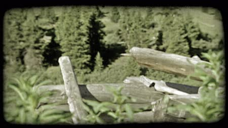 günlüğü : Rack focus of tall green leafy plants or weeds to old broken down fence of ghost town in mountains with pine trees in background. Vintage stylized video clip. Stok Video