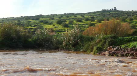 margem do rio : Slider dolly going against the current, left to right of the raging River Jordan in the Galilee of Israel. In the background is a hillside covered with orange, yellow and green foliage. On the far bank of the river, can be seen white flowered plants, gree Stock Footage