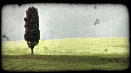 сбор винограда : Shot of green Italian field. Vintage stylized video clip. Стоковые видеозаписи