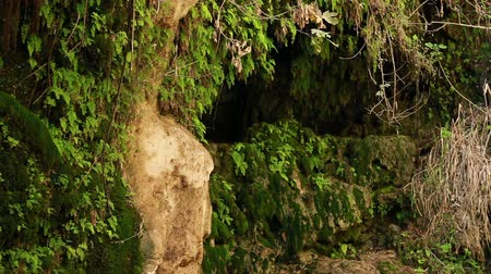 flanked : Ein Gedi Nature Reserve cave, flanked by moss vines and other foliage in Israel.