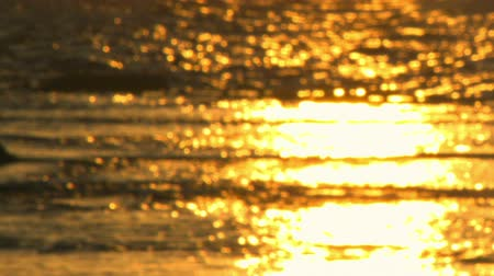 rocks red : Racked focus of golden sunset over the Israeli Mediterranean at Dor Beach. Stock Footage