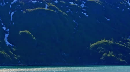 ledovec : Traveling time-lapse of green foliated and white snowy shore filmed from a traveling cruise ship in Glacier Bay National Park near the Inside Passage in Alaska on June 2nd,2009 Dostupné videozáznamy