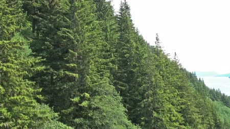 bezmotorové létání : A sped-up tracking shot of treetops from an ascending tram in Mount Roberts tramway, Juneau. Scraps of sky visible on the right. Captured on June 4, 2009.