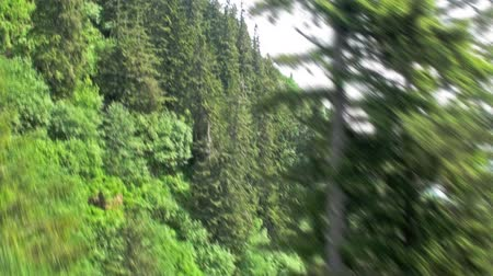 magasság : A tracking shot of treetops from an ascending tram in Mount Roberts tramway, Juneau. Scraps of sky visible on the right. Captured on June 4, 2009. Stock mozgókép