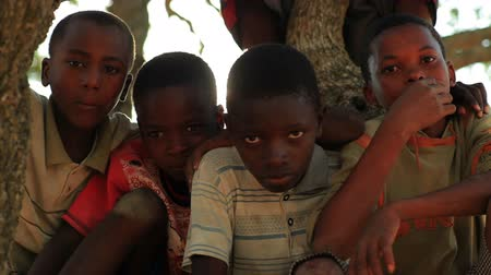 hajápoló : Shot of children sitting in a tree looking at the camera in Kenya, Africa.