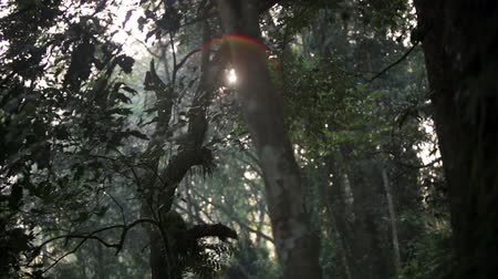 Кения : Racking footage through the leaves, branches, and trunks of a forest canopy to focus on the sun. Filmed in Kenya, Africa. Стоковые видеозаписи