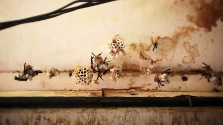 hive : Low-angle footage of long-winged bugs grouped on small objects in a room. Filmed in Kenya, Africa.