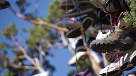 koronka : Close-up pan of many pairs of shoes hanging high in the branches of a tree. A shoe tree.