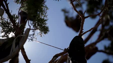 tradição : Close pan of tree branches with a few shoes hanging from them. Sun rays break through branches