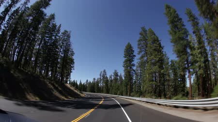 vízválasztó : Driving down curved highway surrounded by large pine trees. Redwoods. California. Stock mozgókép