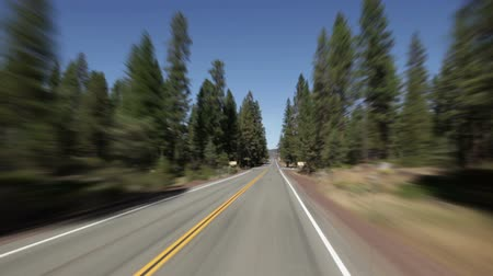 vízválasztó : Driving down straight surrounded by large pine trees, campground signs on either side of road. Red woods.