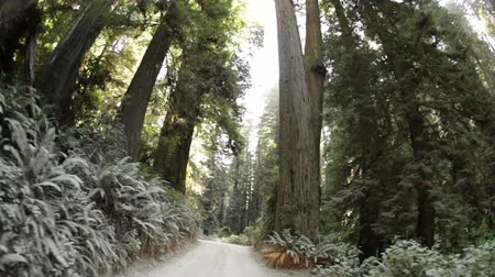 kapradina : Time-lapse driving down a narrow road in a forest in Northern California. Wide-angle.