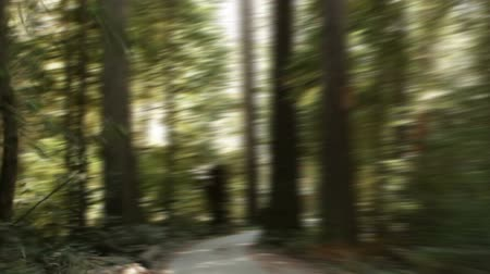 trilhas : Tracking down paved path in a redwood forest with sun breaking through. California.